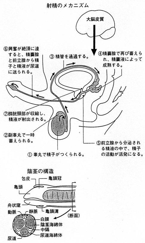 kenkou9-4