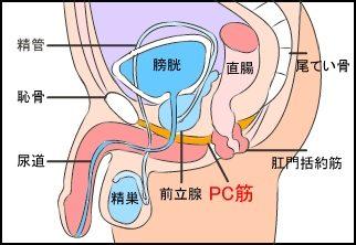 PC筋構造